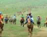 Наадмаар эрлийз, монгол морьдыг ингэж ялгана
