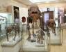 18 нас хүртэлх хүүхдүүдэд бүх музей үнэ төлбөргүй үйлчлэхээр боллоо